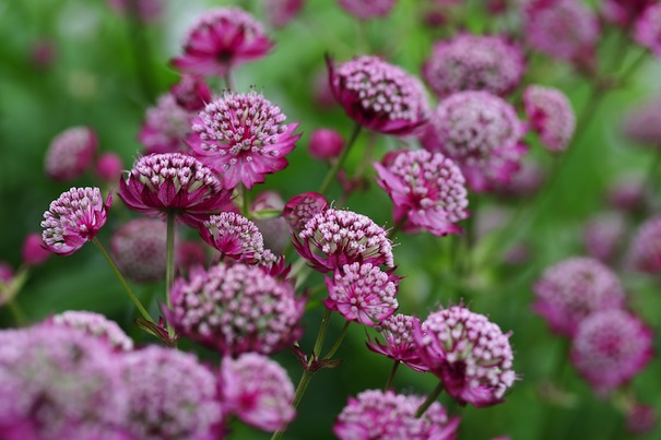 gardening tips july and august